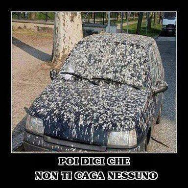 A.A.A. Vendo Renault Clio color merda...