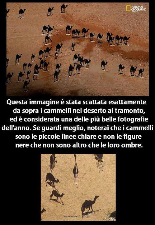 Illusione ottica - Le ombre dei cammelli...