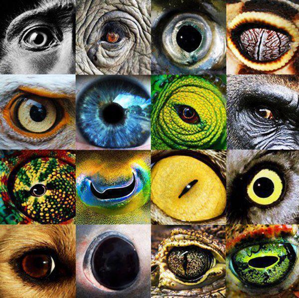 Gli occhi del mondo...