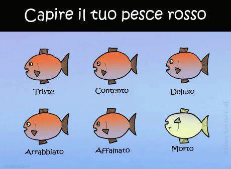 Capire il tuo pesce rosso...
