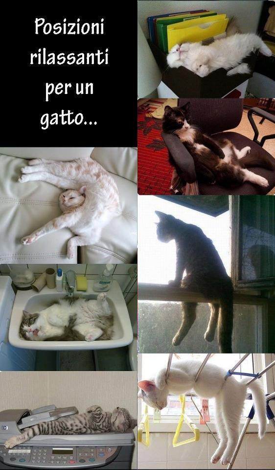 Posizioni feline...