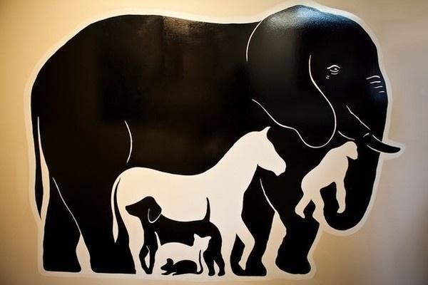 Quanti animali vedi in questa foto?