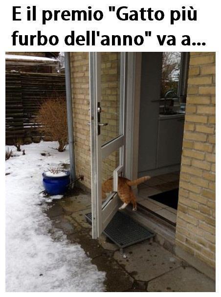 Nobel felino...