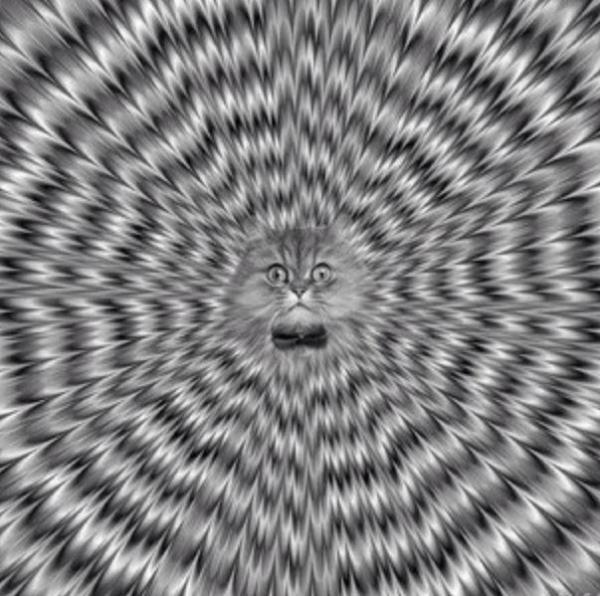 Non avrai altro gatto al di fuori di me!!