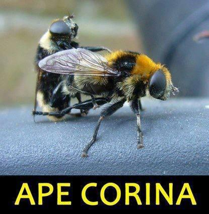 Per un miele più dolce...
