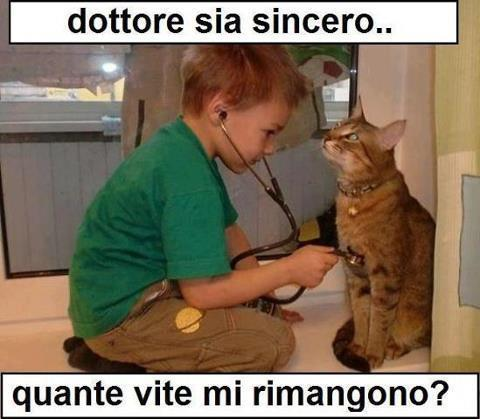 Problemi da gatti...