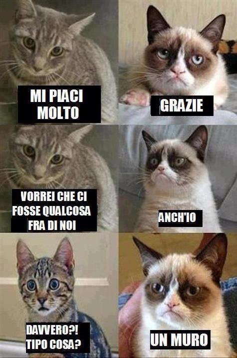 Relazioni feline...