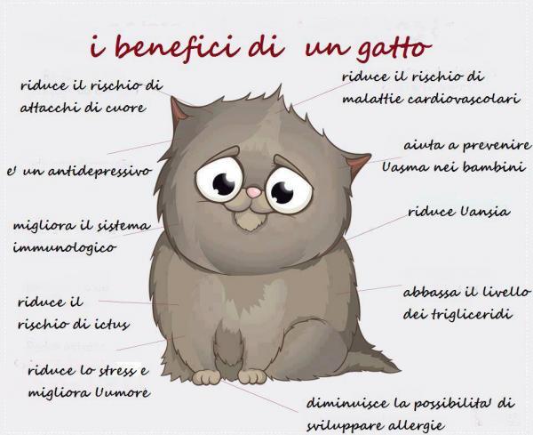 I benefici di un gatto...