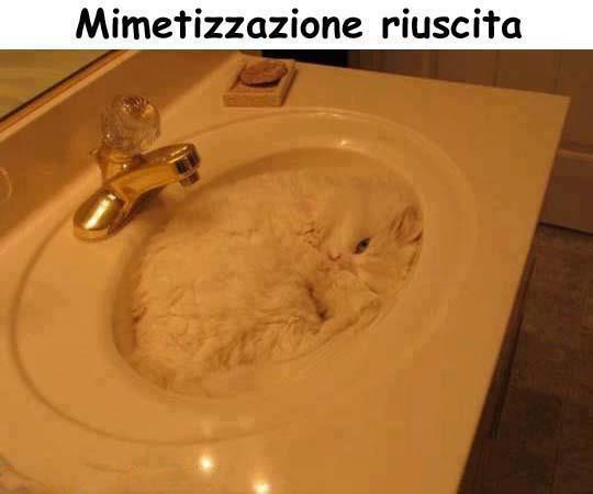 Mimetizzazioni domestiche...