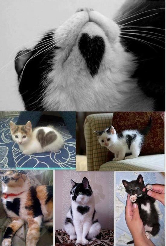 Cuori di gatto...