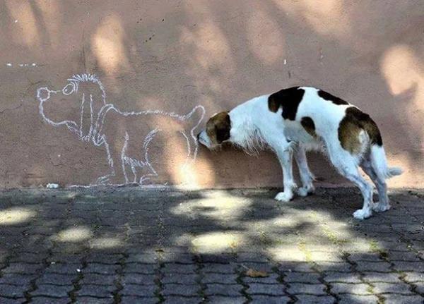 Beati i cani che capiscono tutto con un'annusata di culo...