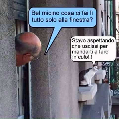 Vicini...