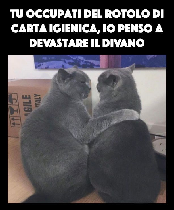 Associazioni feline...