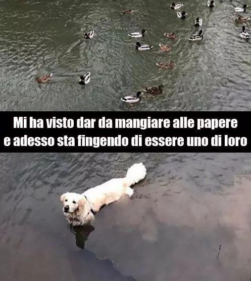Intuito canino...