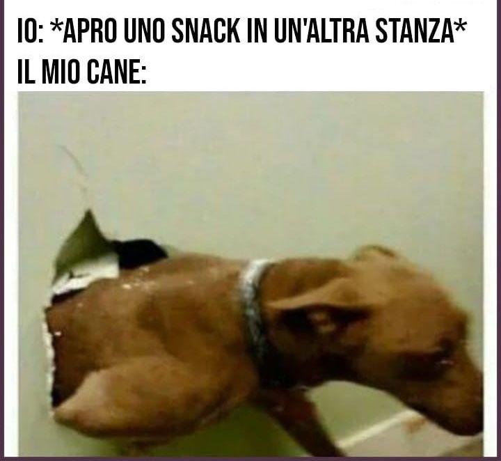 Scatto canino...